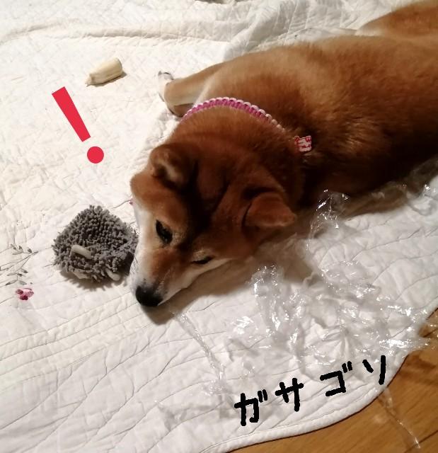 f:id:shibainumugi:20210708110154j:image