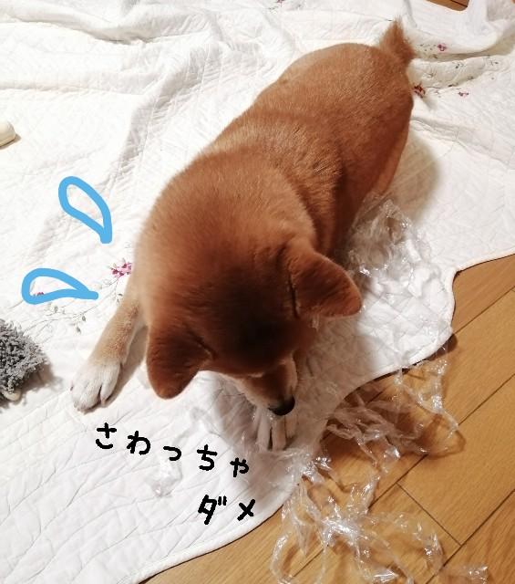 f:id:shibainumugi:20210708110203j:image