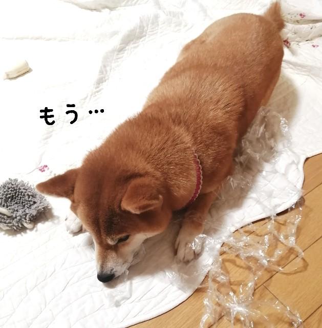 f:id:shibainumugi:20210708110211j:image