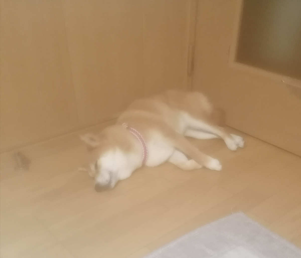 f:id:shibainumugi:20210718104645j:plain