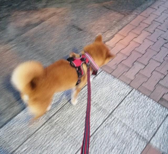 f:id:shibainumugi:20210724102840j:image