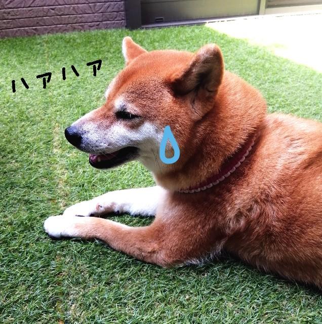 f:id:shibainumugi:20210730102516j:image