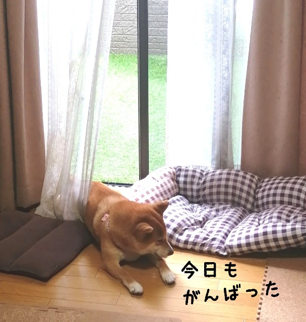 f:id:shibainumugi:20210730102526j:image