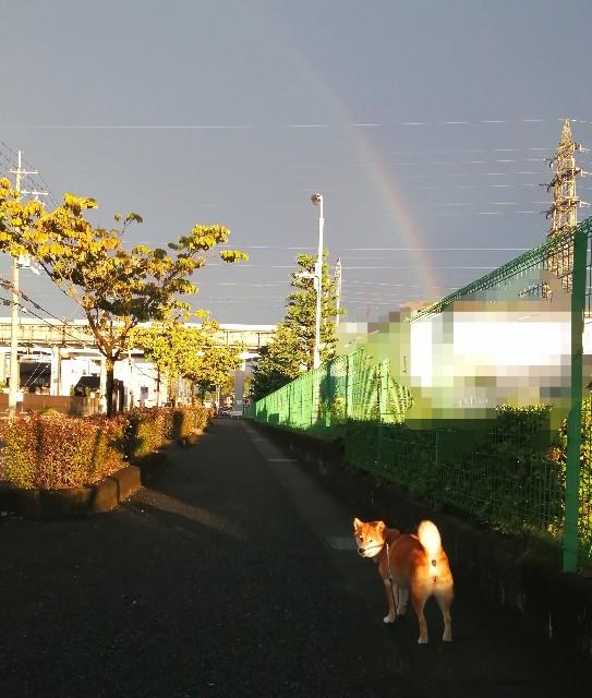f:id:shibainumugi:20210820212908j:image