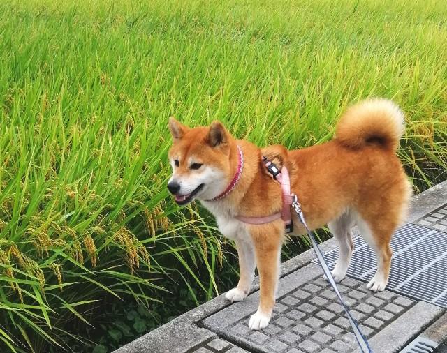f:id:shibainumugi:20210904135354j:image