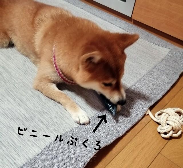f:id:shibainumugi:20210926102922j:image