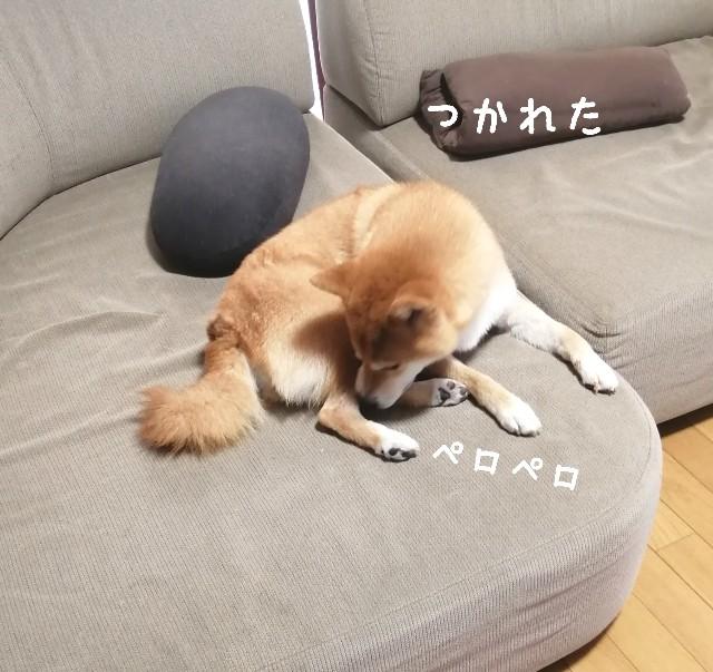 f:id:shibainumugi:20211004124911j:image