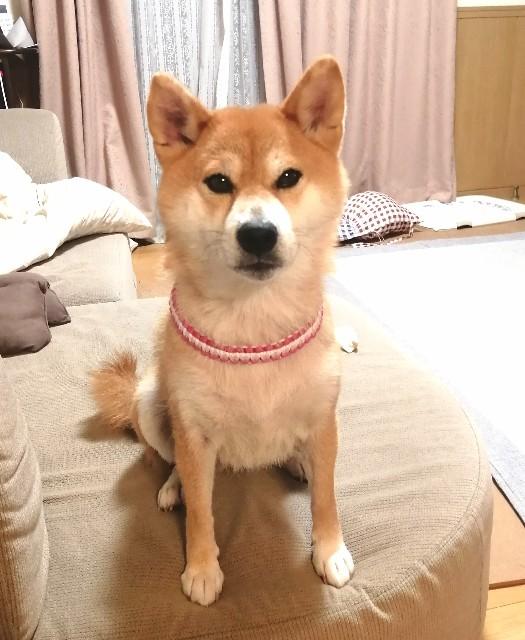 f:id:shibainumugi:20211008100418j:image