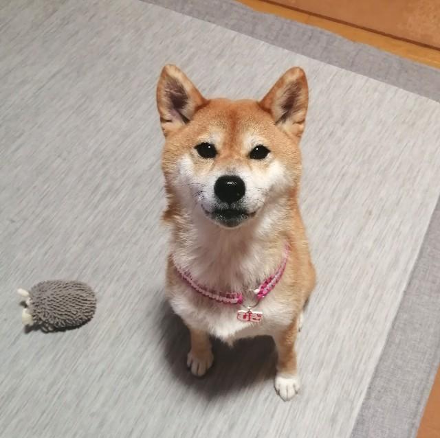 f:id:shibainumugi:20211008100428j:image