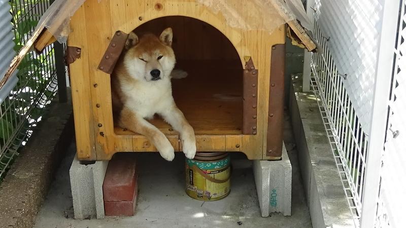 犬小屋と蚊取り線香