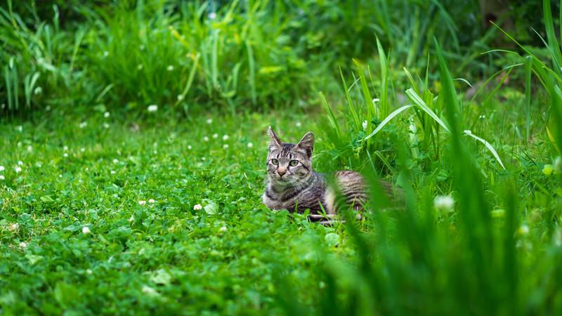 草むらでくつろぐ猫