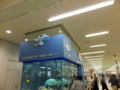 [那覇空港]美ら海水族館の水槽