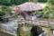 弁財天堂と円艦池