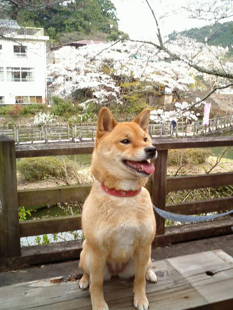 f:id:shibamasaki:20161229192125j:plain