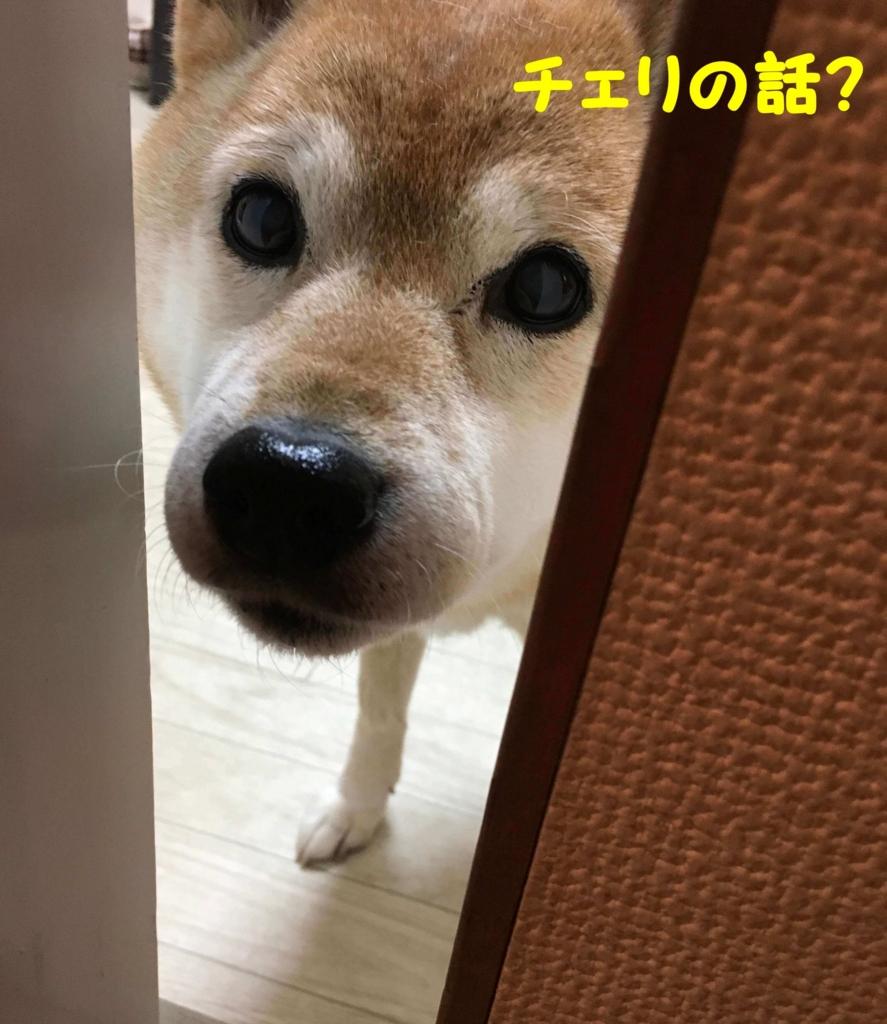 f:id:shibamasaki:20170401171135j:plain