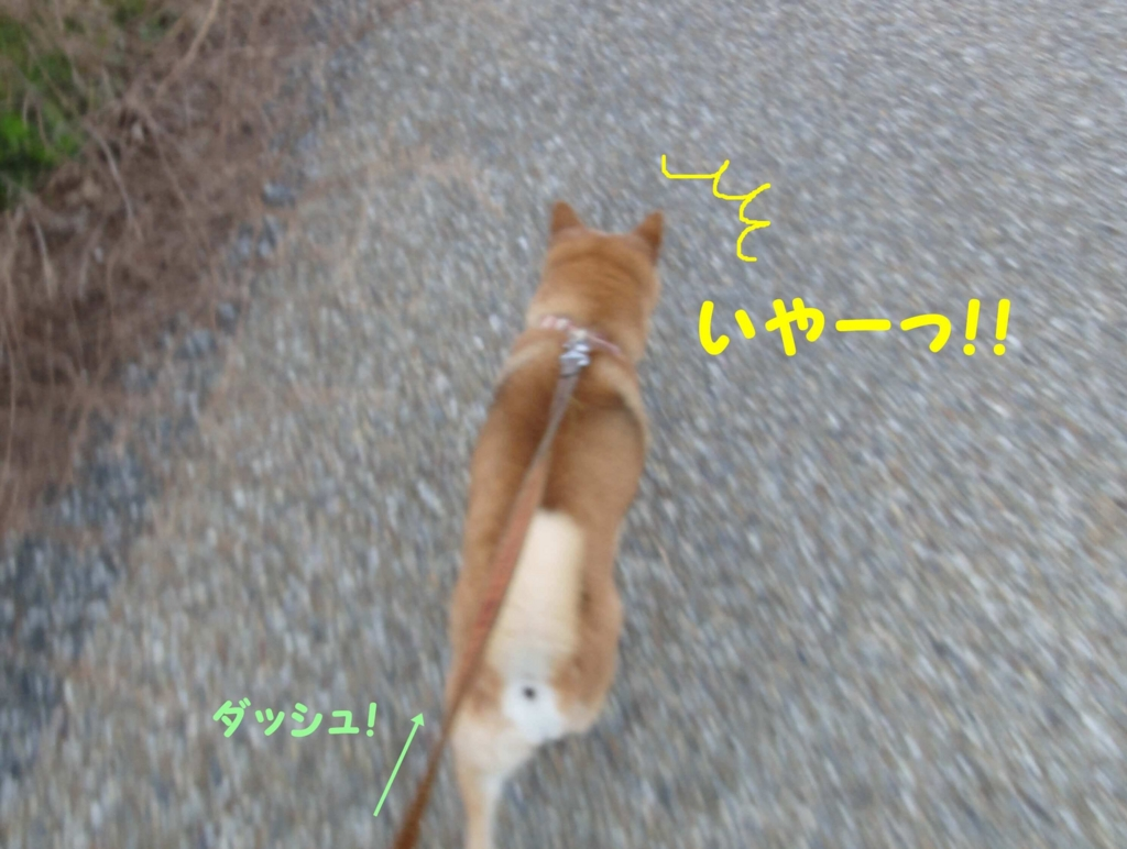 f:id:shibamasaki:20170401173318j:plain