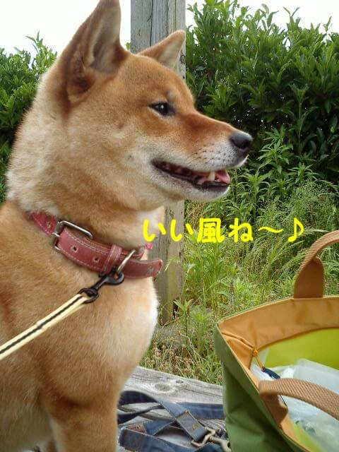 f:id:shibamasaki:20170401173951j:plain
