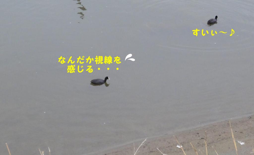 f:id:shibamasaki:20170418223647j:plain