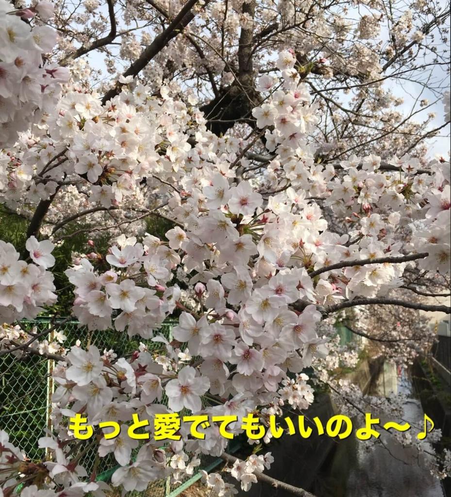 f:id:shibamasaki:20170418224727j:plain