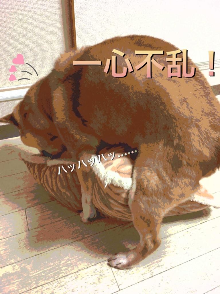 f:id:shibamasaki:20170419220054j:plain