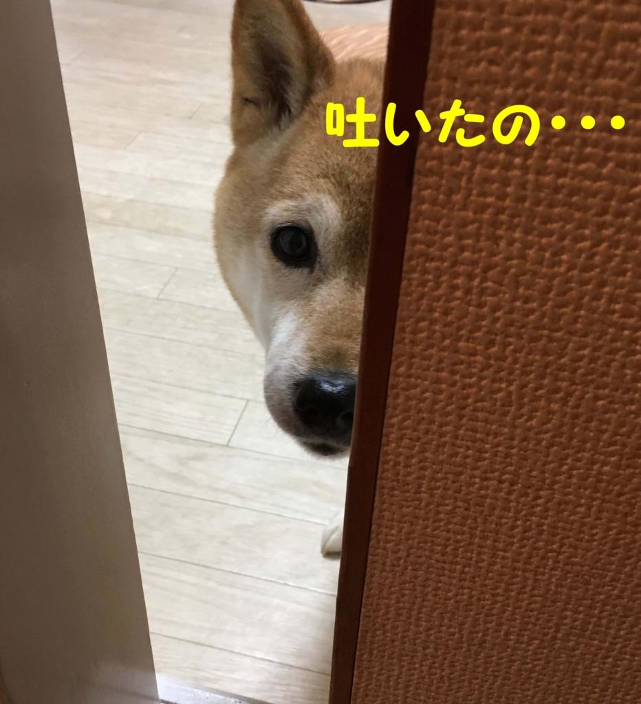 f:id:shibamasaki:20170504193252j:plain
