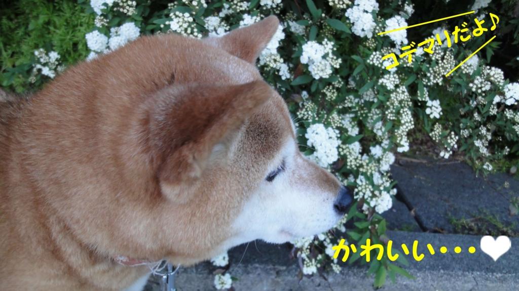 f:id:shibamasaki:20170504194855j:plain