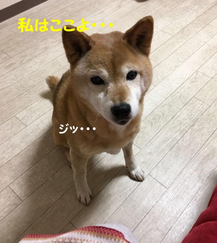 f:id:shibamasaki:20170505193933j:plain