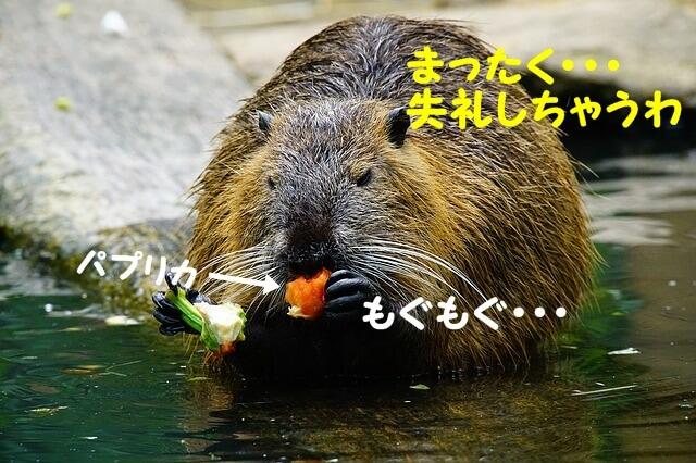 f:id:shibamasaki:20170528163432j:plain