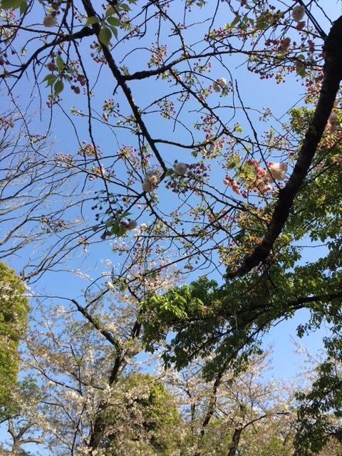 f:id:shibasaijyo:20170414145854j:image