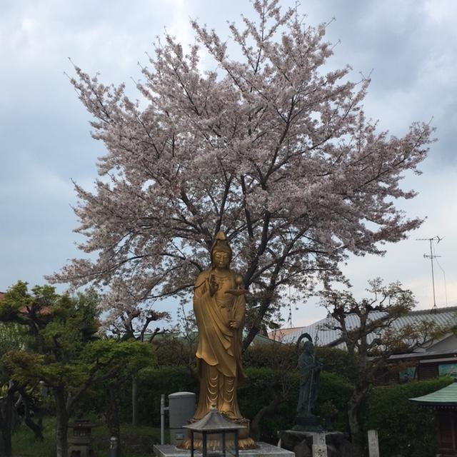 f:id:shibasaijyo:20170415160602j:image