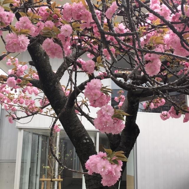 f:id:shibasaijyo:20170415160737j:image