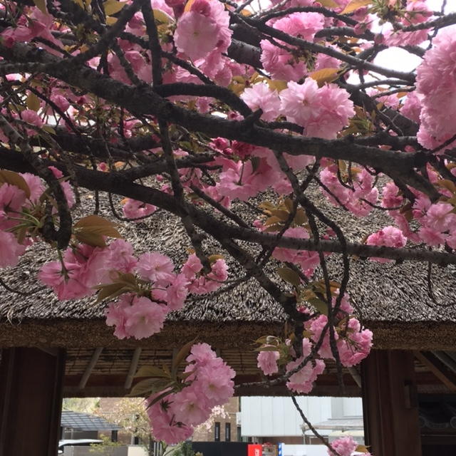 f:id:shibasaijyo:20170415160750j:image