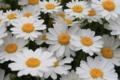 花粉がいっぱい