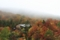 霧雨に煙る森