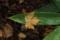 笹の葉にぴたり