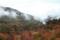 樹海に地熱の雲が行く