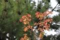 秋が始まる色(法隆寺)