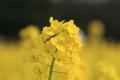[浜離宮恩賜庭園]春、明るく輝いて