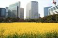 [浜離宮恩賜庭園]Yellow Ocean City