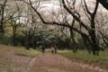 [代々木公園]桜みち
