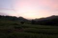 [大山千枚田]日の出を待つ棚田