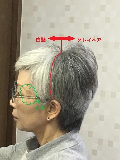 f:id:shibataku3:20190613131952j:plain