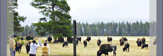 アメリカの世界遺産・イエローストーン国立公園