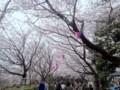 [東京都][北区]花見客にあふれかえる飛鳥山公園