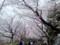 花見客にあふれかえる飛鳥山公園
