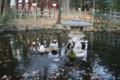 [埼玉県][さいたま市浦和区]調神社の神池にいるうさぎ…