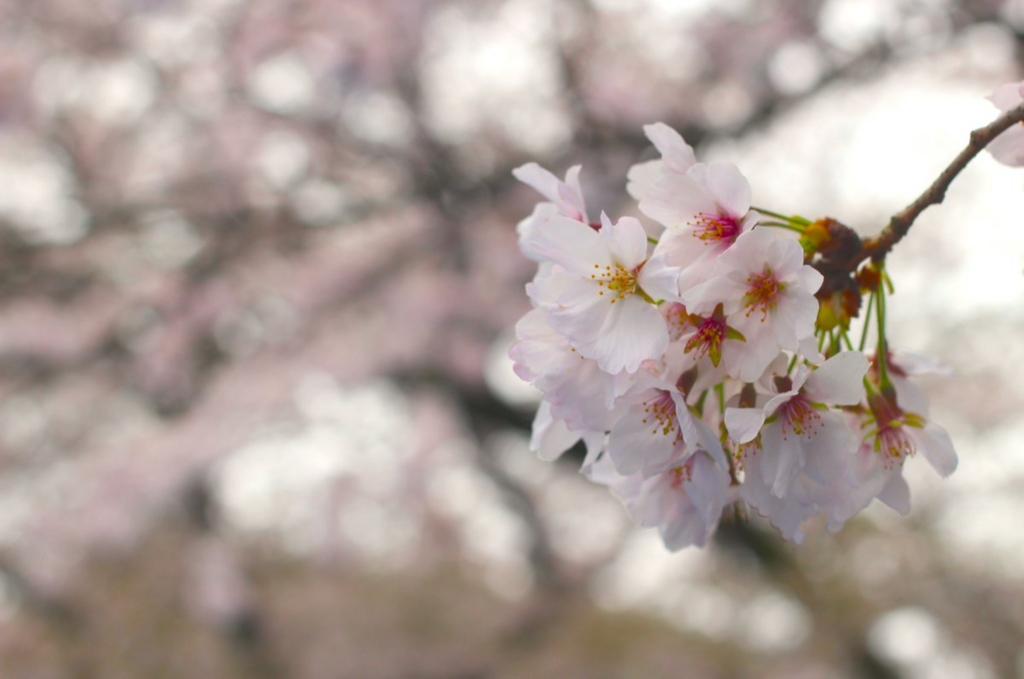 f:id:shibuya319:20170412101552j:plain