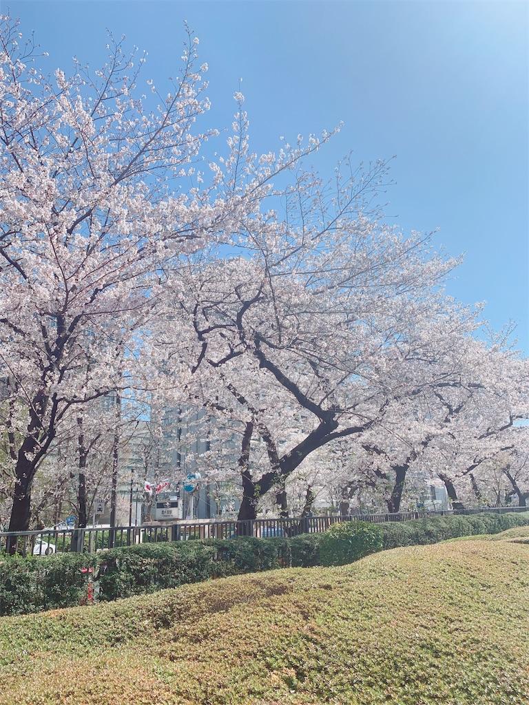 f:id:shibuyaumeboshi:20190404174728j:image