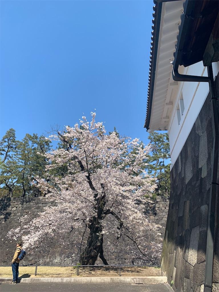 f:id:shibuyaumeboshi:20190404174732j:image