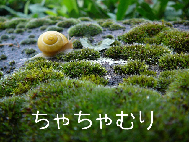 f:id:shidoromodoki:20160116172254j:plain